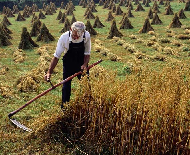 consider_the_grass